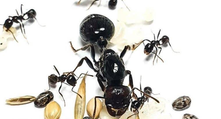Koop nu jouw eigen mierenkolonie!