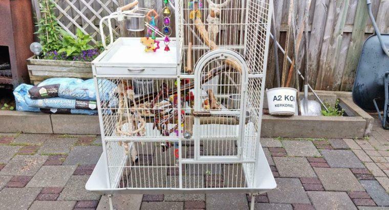 Kooi papegaai/kaketoe (lxhxd) 90cm x 160cm x 70cm